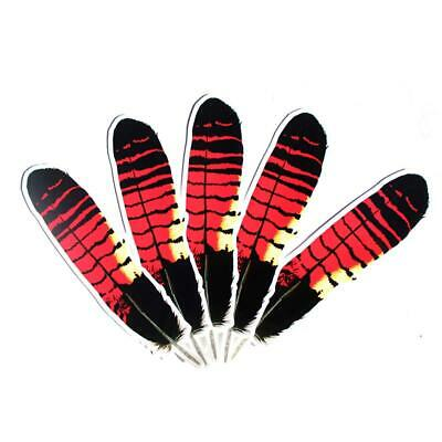 Red Tailed Black Cockatoo feather Sticker x 5