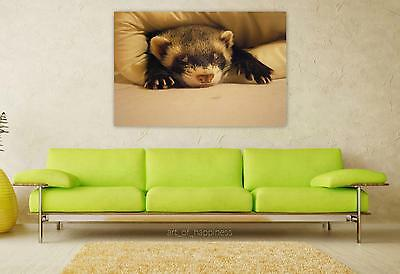 Stunning Poster Wall Art Decor Ferret Relaxation Tenderness 36x24 Inches