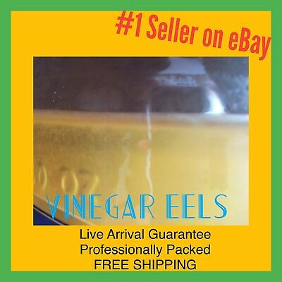 Vinegar Eels Starter Culture LIVE Fry Fish Amphibian Coral Invertebrate Food