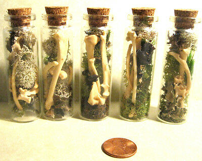 Vial of real rodent bones, Gothic/Victorian decor, taxidermy, oddity