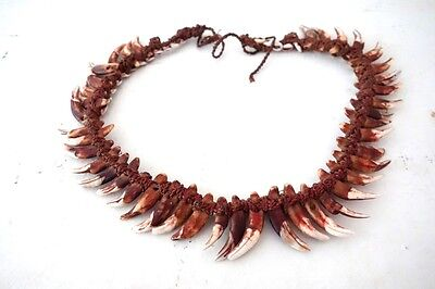 Nice vintage dog tooth and seashell necklace from Papua New Guinea - 1960s
