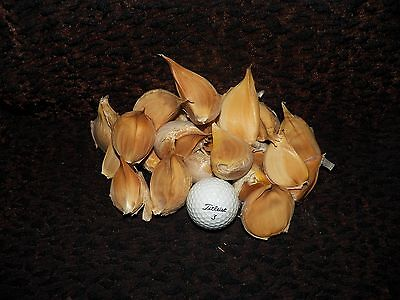 1 1/4 lb ELEPHANT GARLIC CLOVES -- PERFECT for EATING and PLANTING -- $9.95