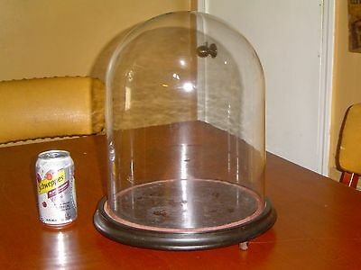 Large Antique Hand Blown Glass Display Dome Victorian Clock Taxidermy Wood Base