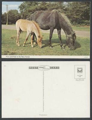 Pony and Foal in New Forest, Hampshire, Horse Horses Ponies Animals Old Postcard