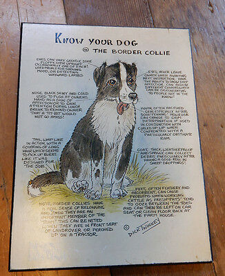 Vintage Know Your Dog Cartoon #14 The Border Collie Wall Hanging Dick Twinney