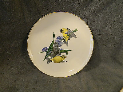 Common Goldfinch Syracuse China American Song Birds Plate by Athos Menaboni