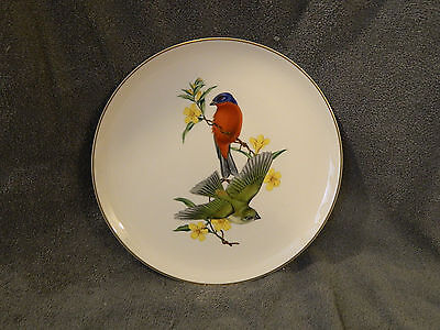 Painted Bunting Syracuse China American Song Birds Plate by Athos Menaboni