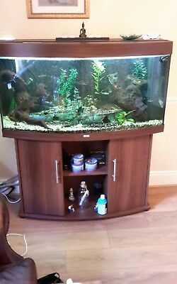 jewel 4ft bow front fish tank