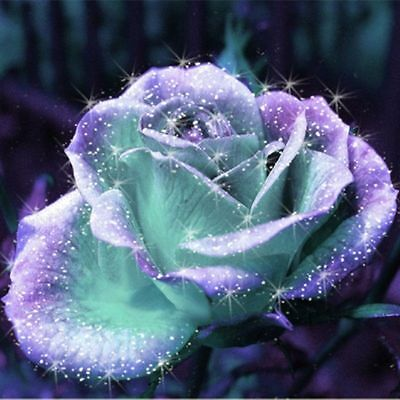 Hot Purple And Light Green 90 Perennial Rose Flower Seeds Plant Free Shipping