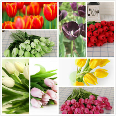 AU 100PCS 9 Type Fresh Tulip Flower Seeds Indoor Potted Home Office Window Decor