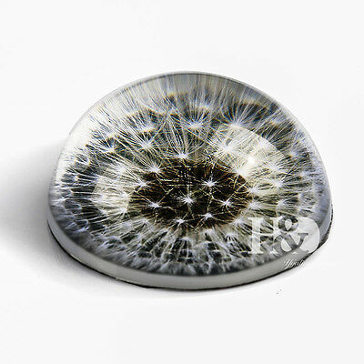"""Magnifying Glass Paperweight Dome Semi Dandelion Crystal Ball With a Gift Box 3"""""""