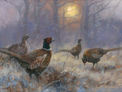 Pheasants in the Snow Christmas Cards pack of 10 by John Trickett. C546X
