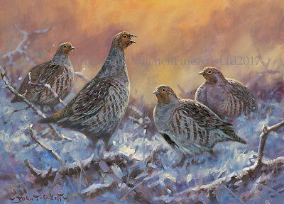 Partridges in the Snow Christmas Cards pack of 10 by John Trickett. C547X