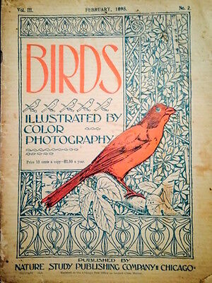 """Antique magazine  """"Birds"""" Illustrated by Color Photpgraphy, February 1898 issue"""