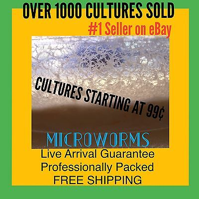 Microworms Live Starter Culture Fry Food Fish Amphibian Micro Worm