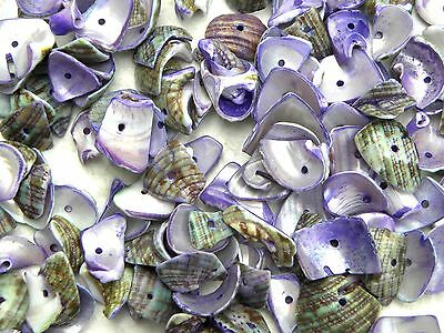 50 Purple Aqua & Brown Shell Irregular Mixed Size Chips Beads with Drilled Hole