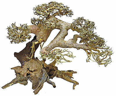 Superfish Bonsai Naturelle Decoration Aquarium