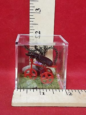 *Taxidermy Entomology Anthropomorphic Tricycle Bike Beetle display-insect bug