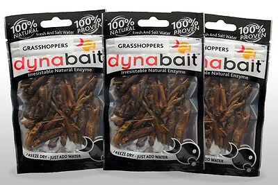 Dynabait Grasshoppers 3 x ( dehydrated fishing tackle, bait,no freezer required)