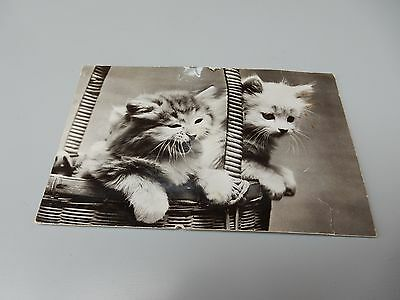 1960s Novelty postcard- Cat / Kittens with squeak noise