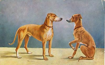 Vintage Postcard PC 2 Italian Greyhound Dogs Portrait Netherlands c1911