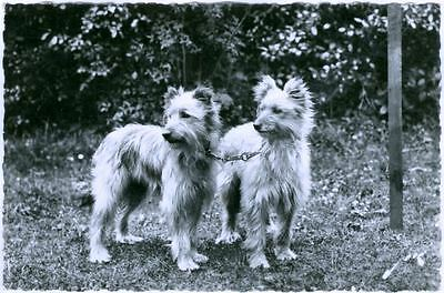 RARE Old Postcard PC French Pyrenean Shepherd Postcard PC  from France 1956