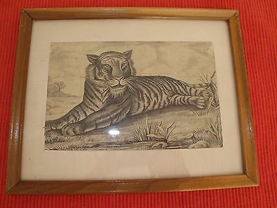 "Antique Print Engraving Colored Lithograph Tiger 9 1/2"" X7"" Vtg Tiger Hunt Photo"