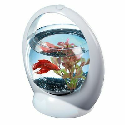 Betta Ring Tetra - 1,8 L - Argent