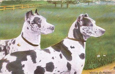 Postcard PC 2 Great Dane Dogs Waiting for Master England Animal Life Tuck 1908