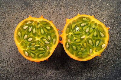African Horned Melon seeds, Jelly Melon, Cucumis Metuliferus, Organic, Heirloom