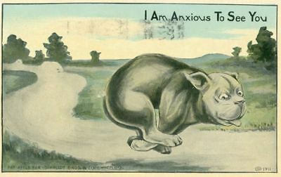 Old Postcard PC Running Pit Bull Anxious to See You Dog 1911 Schmidt Bros. USA