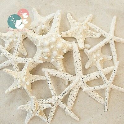 Set of 12 Mixed White Starfish – Sizes Range From 2 to 3.5 inches 4 5.5...