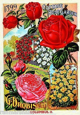1899 Cottage Rose Vintage Flowers Seed Packet Catalogue Advertisement Poster
