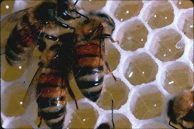 Bee-keeping and Bee Hives Construction Information on CD