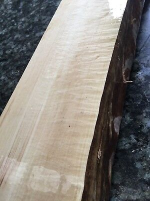 Banyalla Cheeswood Block/billet. Luthier . Wood Collector #966