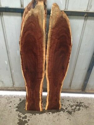 Ringed Gidgee Pair Of Mini Slabs / Panels Oversize . #973
