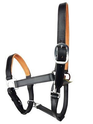 Rumani High Quality DD Leather Halter with Contrasting Colour Padding