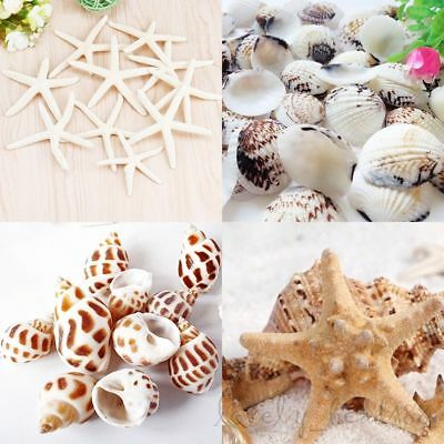 Natural Craft Shells Conch Starfish Miniature Aquarium Jewellry Making Art DIY