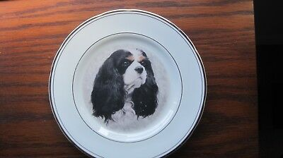 Cavalier King Charles Spaniel Tricolour Collector's Plate  English Estate Sale