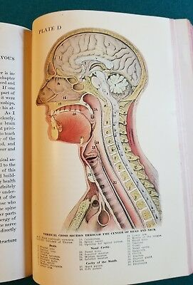 Rare Antique Medical Book Manikin Colored  Plates Physical Culture Health 1920