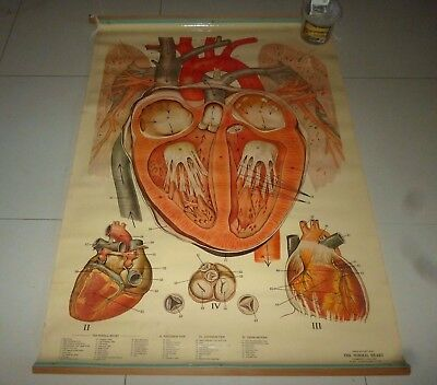 "Vintage Schick Pull Down Laminated Anatomy Medical Chart ""the Normal Heart"""