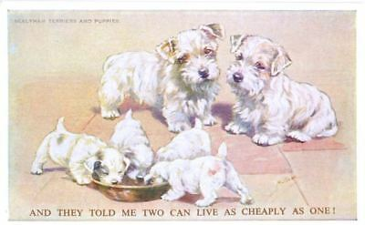 Old Postcard PC Sealyham Terrier Family Dogs Valentine's Mabel Gear England c191
