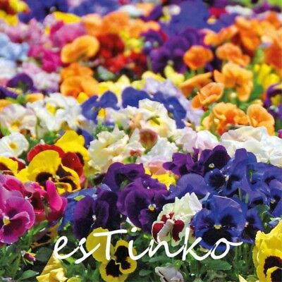 50pcs Mix-colors Pansy Seeds Hardy Plant Flower Seeds Perennial Home Garden DIY