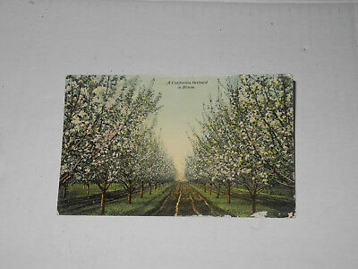 "Vintage color Postcard, unused ""California orchard in Bloom"" PNC Glosso"