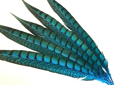 5 Aqua Blue Pheasant Tail Feathers 30-37cm DIY Craft Millinery Vase Home Decor