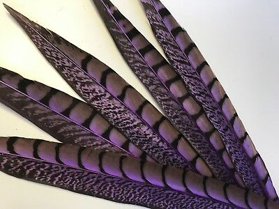 5 Purple Pheasant Tail Feathers 30-37cm DIY Craft Millinery Vase Home decor