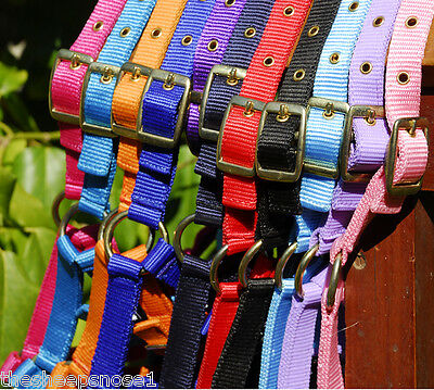 Rhinegold Adjustable Foal Small Pony Headcollar Head Collar All Colours Halter
