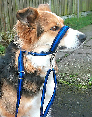 Figure of 8 eight head collar leads, 19mm Soft Cushion Web  with clip in handle