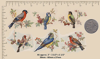"""6 Vintage  Waterslide ceramic decals Birds in Branches Approx. 2"""" x 1 1/2"""" P61"""