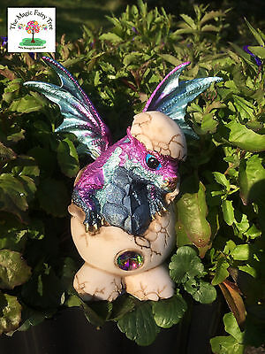 Purple & blue rainbow dragon hatching from egg